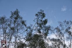 Borneo - Sabah - Weston Wetland Park (8)-mod