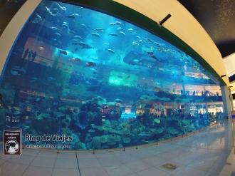 Emiratos Arabes Unidos - Dubai (5)-mod