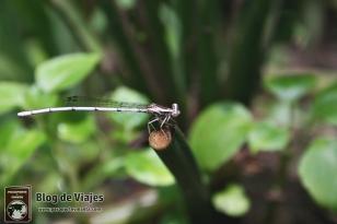 Kuala Lumpur - Buterfly Park (3)-mod