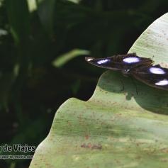 Kuala Lumpur - Buterfly Park (4)-mod
