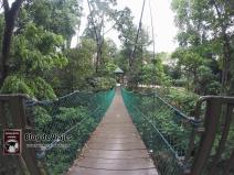 Kuala Lumpur - Canopy Walks (1)-mod