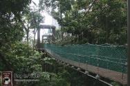 Kuala Lumpur - Canopy Walks (2)-mod